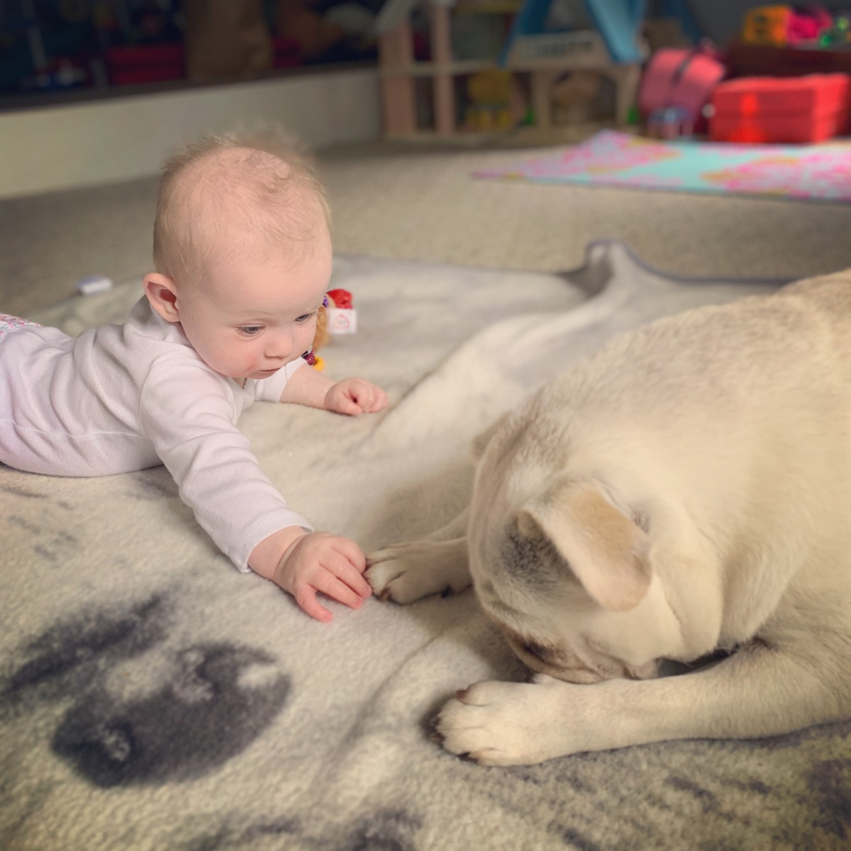 How to Prepare Your Furbabies for YourBaby