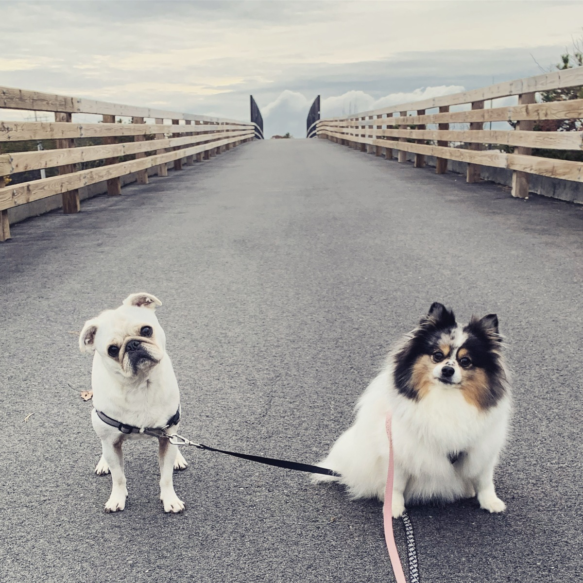 Dog Friendly Eats on TheCape